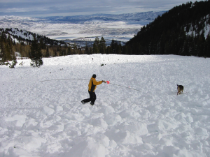 Dean and Midas searching a large slide in Summit County, Utah.