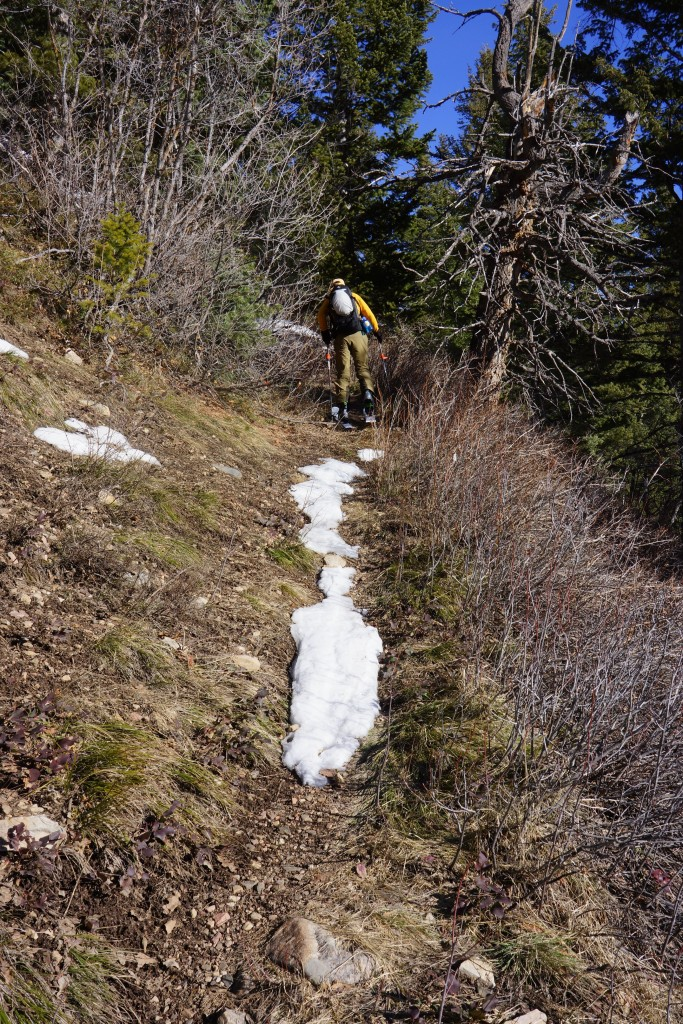 By late February 2015, this is what a skin track at 7500 feet looked like in the Central Wasatch.