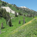 The Honey Badger- Traversing the Wasatch