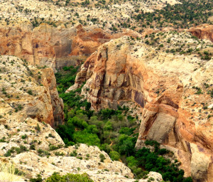 canyon-of-calf-creek